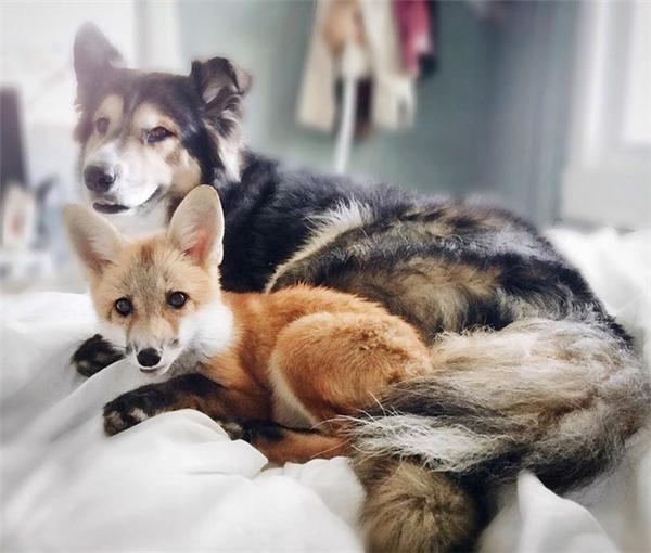 Cặp đôi Cáo - Cún cưng nhất mạng xã hội khiến FA phải GATO hết nấc