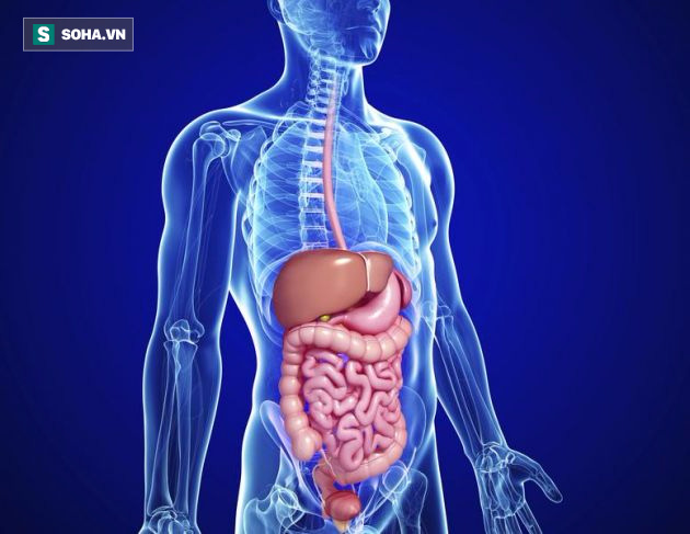 5 chuyên gia lý giải tình trạng ngũ tạng bị nóng và cách khắc phục đơn giản bằng thực phẩm - Ảnh 2.