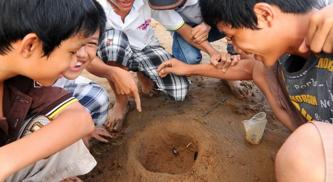 Con nít vùng ngoại ô Sài Gòn vẫn chơi đá dế!