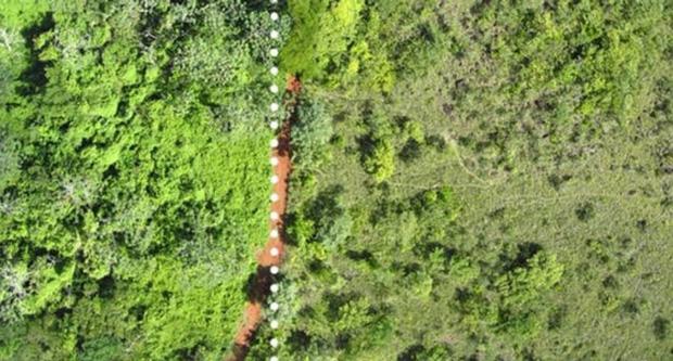 """Một công ty nước ép đổ 12.000 tấn vỏ cam xuống khu bảo tồn thiên nhiên, 19 năm sau, đây là """"hậu quả"""" - Ảnh 3."""