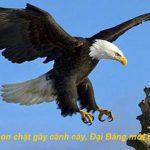 Chỉ đơn giản là cắt cành cây nơi con chim đậu, Đại Bàng sẽ bay lên
