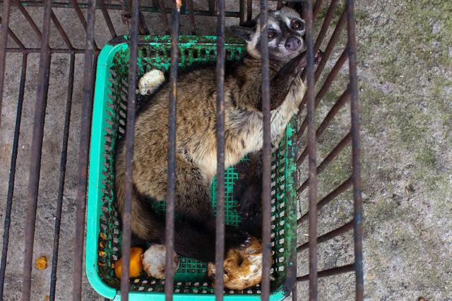 Đáng buồn là nhiều du khách không hề biết rằng những con chồn bị nhốt và đối xử rất tàn nhẫn, thậm chí còn chụp ảnh và đưa lên mạng xã hội, Neil DCruze, nhà nghiên cứu từ tổ chức phi lợi nhuận Bảo vệ Động vật Thế giới viết trong báo cáo.
