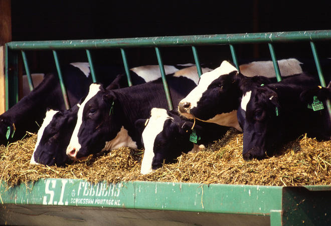 Nhiều người tẩy chay sữa bò vì sợ ung thư: Đừng nghe lời đồn, hãy nghe chuyên gia nói - Ảnh 2.