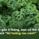 """Loại rau cải nhiều canxi hơn sữa, ngừa ung thư khiến thế giới """"phát sốt"""" ngày càng nhiều ở Việt Nam"""