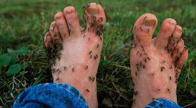 """Lại đến mùa nhiều muỗi, học ngay những cách """"ngụy trang"""" này để muỗi không vo ve quanh bạn"""