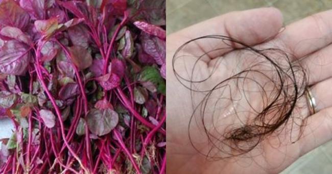 Tóc rụng mãi không ngừng: hãy dùng nước rau dền đỏ