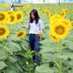 2 cánh đồng hoa vàng rực dịp cuối năm, là điểm hẹn lý tưởng cho những ngày nghỉ Tết Dương lịch sắp tới